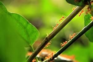 Gegen Ameisen Im Garten : ameisen im garten so vertreiben sie sie mit gef hl ~ Michelbontemps.com Haus und Dekorationen