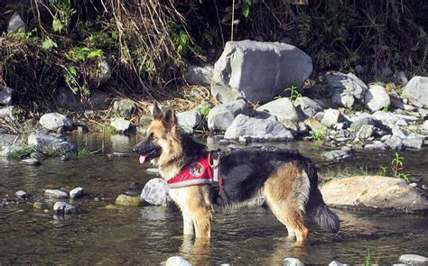 The Struggle To Keep  Ee  Search Ee   And Rescue  Ee  Dogs Ee   In Nepal Healthy  Ee  Dog Ee   International