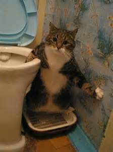 toilet cats toilet cat 1funny