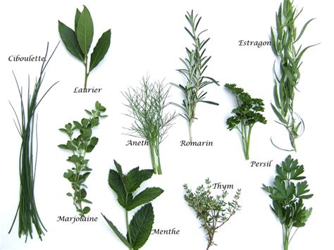 les herbes de cuisine herbes aromatiques produits cuisine française
