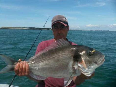comment cuisiner une daurade pêche de la daurade royale a fish pêche en mer