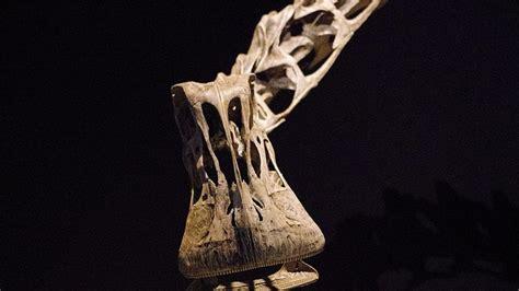 10 Fun Facts About Nigersaurus Mental Floss