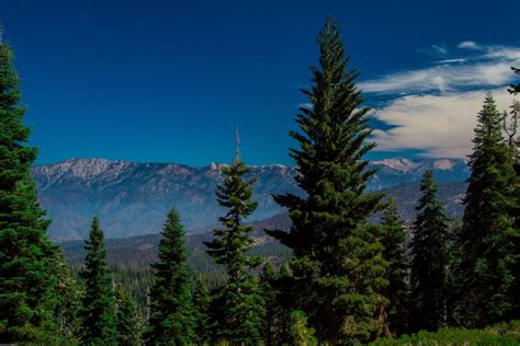 visit sequoia national park kings canyon