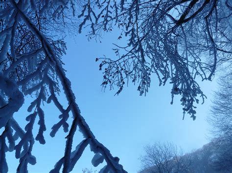 images tree nature forest branch snow winter