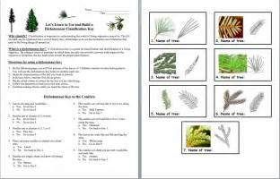 Plants Worksheets Gallery For Gt Plant Dichotomous Key Worksheet