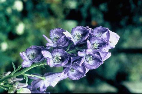 top 10 bloemen top 10 van vaste schaduwplanten groenvandaag