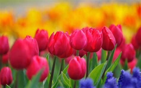 bright flowers beautiful bright flowers wallpaper 35304 1920x1200 px hdwallsource com