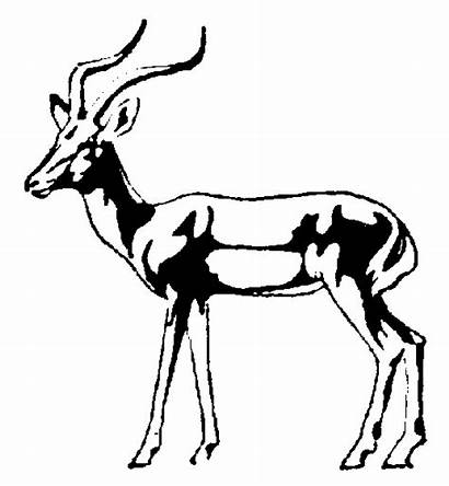 Impala Coloring Clipart Clip Pages Springbok Animal