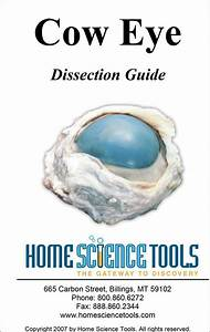 Cow Eye Dissection Guide