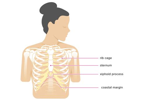 Xiphoid Cancer Symptoms Xiphoid Process Pain Lump Removal