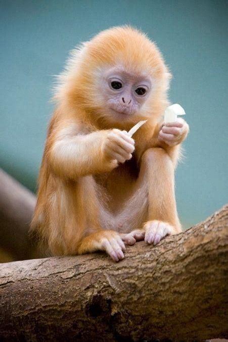 cute baby monkey  cute  bear