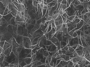 NASA - Decorated Carbon Nanotubes