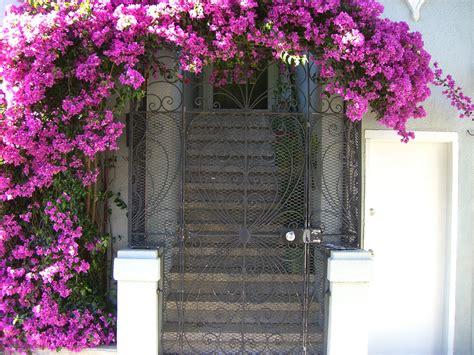 best flowering vines 10 best flowering vines for arches pergola arbor and trellis the self sufficient living