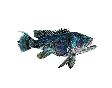 bass fish sea saltwater fishing grouper decal camp boat window rv auto