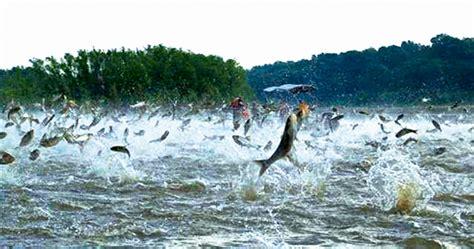 carp asian invasion prepares there
