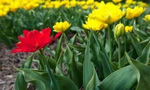 Planter Des Bulbes : comment planter et propager des bulbes de fleurs trucs ~ Dallasstarsshop.com Idées de Décoration