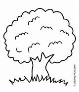 Coloring Tree Pages Printable Nature Adults Roots Apple Simple Olive Children Trees 4kids Template Sheet Preschoolers Fall Getcolorings Outline Inspiration sketch template