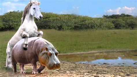 hippo horse hd fail