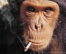 Funny monkeys smoking  Funny Animal  Funny Monkeys Smoking