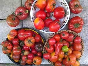 Planter Des Graines De Tomates : des belles tomates du 1er juillet au 1er d cembre un ~ Dailycaller-alerts.com Idées de Décoration