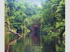 Kehutanan dan Pertanian Hutan Rawa Pengertian, Jenis dan