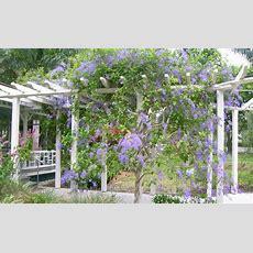 Pergolas With Climbing Plants Pictures Pixelmaricom