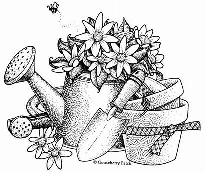 Watering Patch Gooseberry Drawing Garden Gardening Cans