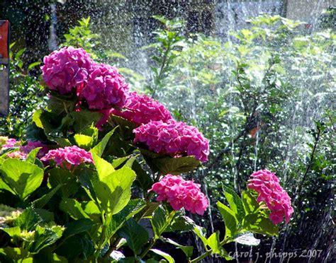walmart garden center photo carol j phipps photos at