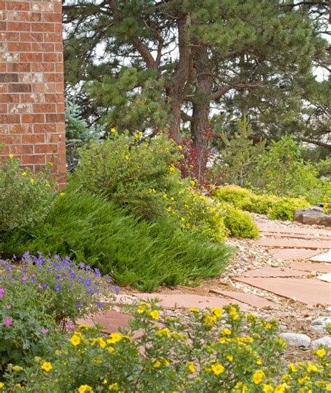 what is xeriscape landscaping what is xeriscape and why is it important greenbuildingadvisor com