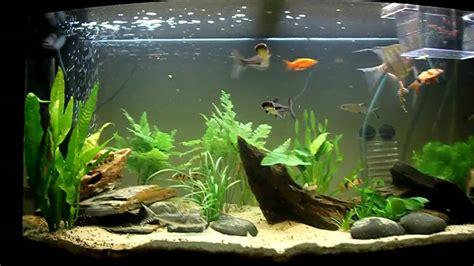 re eclairage aquarium juwel 180 our planted aquarium juwel vision 180 hd