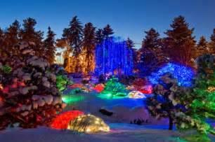 Denver Zoo Lights by Blossoms Of Lights Denver S Best Realtor