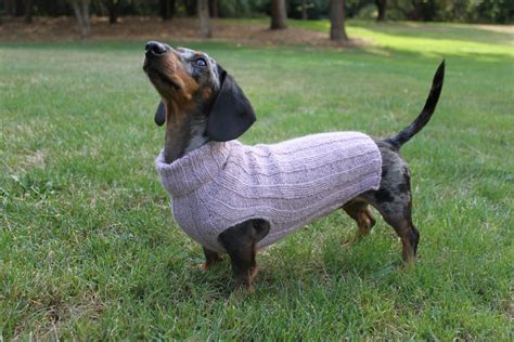 Dachshund Coats And Sweaters