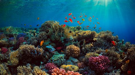 coral reef wallpaper amazing coral reef wallpaper wallpaper studio 10 tens Underwater