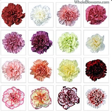 carnation color meanings national flower series southern europe 1 kingdom of spain