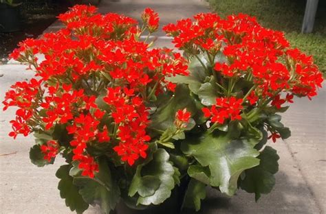 plants   strangest people list houseplants