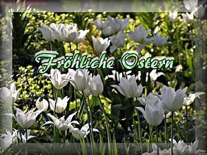 Osterbilder Frhliche Ostern Mit Weien Tulpen Zum