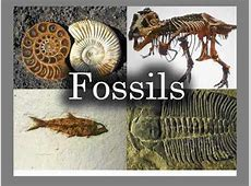 Teacher's Guide to Fossils YouTube