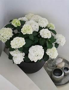 Pflanzen Im Treppenhaus : sch ner wohnen mit hortensie dekoration interieur interior ~ Orissabook.com Haus und Dekorationen