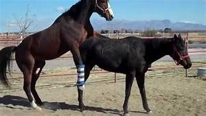 Image Gallery horse breeding