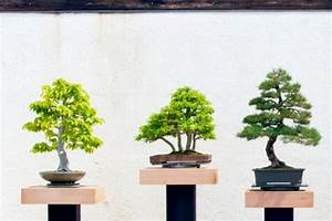 Bonsai Baum Schneiden : bonsai baum pflegen schneiden ursprung arten ~ Frokenaadalensverden.com Haus und Dekorationen