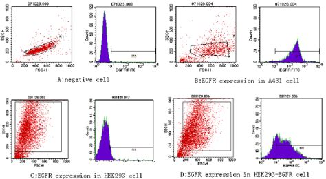 Detection Of Egfr Expression In Various Cell Lines By Flow. Cox Communications Telephone. Journalism Grad School Rankings. Nexium Versus Omeprazole E Discovery Services. Heritage Hills Nursing Home My Network Map. Download Microsoft Security Essentials Antivirus. Occupational Therapy Program Online. International Mba Vs Mba Spread Betting Sites. Forensic Science Master Programs