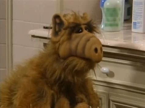 alf alf photo  fanpop