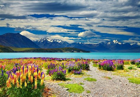 Lake Tekapo New Zealand Feel The Planet