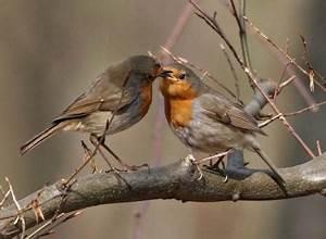 Graines Oiseaux Du Ciel : poemes de robert casanova oiseaux du ciel ~ Melissatoandfro.com Idées de Décoration
