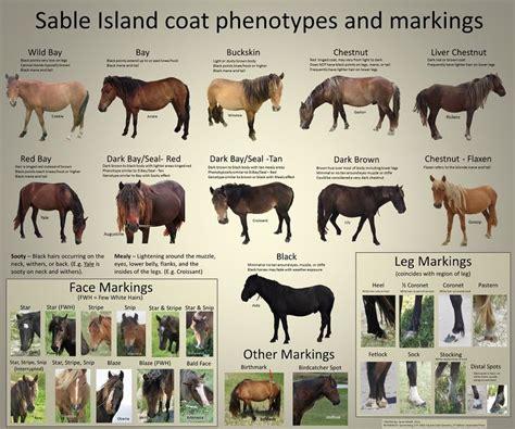 images  horse color galore  info