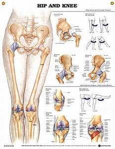50 Best Orthopaedic Nursing Images On Pinterest