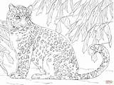 Coloring Leopard Snow Pages Amur Drawing Baby Clouded Line Leopards Printable Simple Animal Sketch Drawings Sheets Face Designlooter Print Getdrawings sketch template