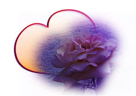 rose wasser schleife kostenloses bild auf pixabay