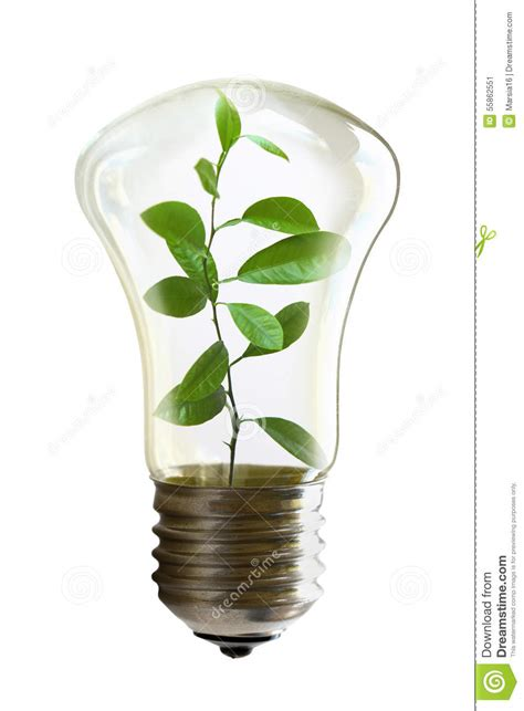 light bulb with a growing plant inside stock photo image