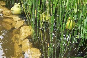 Wasserpflanzen Teich Kaufen : wasser und sumpfpflanzen garten gestaltung und ~ Michelbontemps.com Haus und Dekorationen